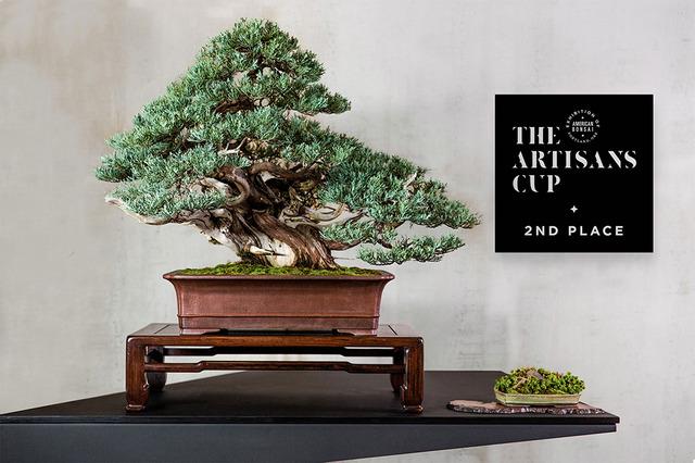 """北アメリカ中心に広がる""""盆栽""""、次世代のアートとして世界へ再発信 ..."""